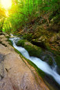 Flowing water stream in mountain forest between mossy stones at sunrise time Stock Images
