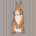 Fluffy brown standing rabbit Stock Image