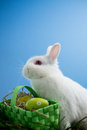 Fluffy bunny rabbit sitting basket easter eggs blue background Stock Images