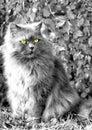 Našuchorený mačka hľadá preč
