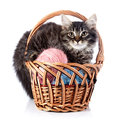 Fluffy cat in a wattled basket with woolen balls striped not purebred kitten kitten on white background small predator small Stock Photo