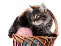 Fluffy cat in a wattled basket with woolen balls striped not purebred kitten kitten on white background small predator small Royalty Free Stock Photography