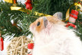 Fluffy cute hamster with decorated Christmas tree Royalty Free Stock Photo