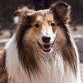 A fluffy dog Stock Images