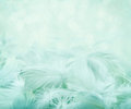 Fluffy feathers on turquoise blurry background soft blue and bokeh day dreaming concept Stock Photos