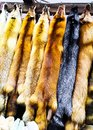 Fluffy fox skins on the market. Animal skins with fur hanging in the market for sale Royalty Free Stock Photo