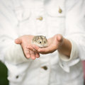 Fluffy hamster in the hands of the little girl Royalty Free Stock Photos