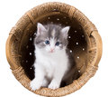 Fluffy kitten in a basket isolated on white background Stock Images
