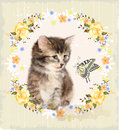 fluffy kitten, roses and butterfly.