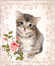 Fluffy kitten with roses and butterfly.