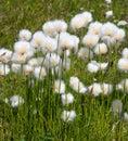 Fluffy plant Royalty Free Stock Photos