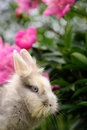 Fluffy rabbit in the garden with flowers a cute pink peony background Stock Photos