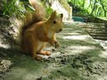 Squirrel close-up eats sunflower seeds on a summer sunny day. Royalty Free Stock Photo