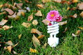 Fluorescent lamp energy saving with a flower on the green grass Royalty Free Stock Image