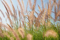 Flutter grass in boonrawd farm Royalty Free Stock Photo