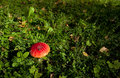 Fly agaric, death cap Stock Image