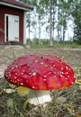 Fly agaric mushroom with hut Royalty Free Stock Images