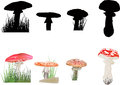 Fly agaric mushrooms collection isolated on white illustration with background Stock Image