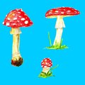 Fly agaric mushrooms. Isolated on blue background.