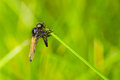 Fly On Blade Of Grass