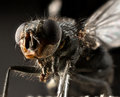 Fly extreme macro Royalty Free Stock Photo