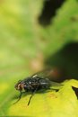 Fly on the green leaf small sun Royalty Free Stock Photos