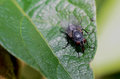 Fly on a humid night this finishes up his dinner hot summer Stock Images