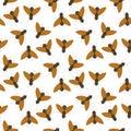 Fly insects wildlife entomology bug animal nature beetle biology buzz icon Royalty Free Stock Photo