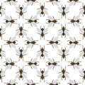 Fly insects wildlife entomology bug animal nature beetle biology buzz icon vector illustration pattern seamless Royalty Free Stock Photo