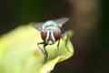 Fly on a leaf green Royalty Free Stock Images
