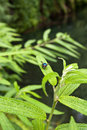 Fly leaf plant isolated blue sitting on a of a Royalty Free Stock Image