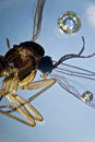 Fly microphoto detail of a Stock Images