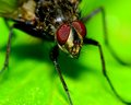 Fly on a plant macro closeup of perched Royalty Free Stock Photo