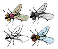 Fly set of four variations of Stock Photo