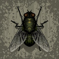 Fly a on textured surface vector illustration Royalty Free Stock Photography