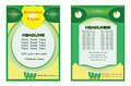 Flyer Green Yellow design. Poster design. Brochure. Layout. Report. Banner template