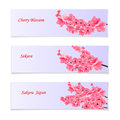 Flyer, invitation bills or leaflets. With a depiction of flowering realistic branches with a pink cherry. Sakura