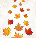 Flying autumn orange maple leaves Stock Images