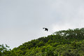 Flying bat in Seychelles, Mahe island Royalty Free Stock Photo