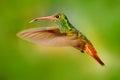 Flying Bird, Hummingbird Rufou...