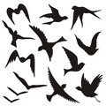 Flying bird silhouettes Royalty Free Stock Images