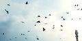 Volante uccelli
