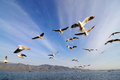 Flying birds in blue sky Stock Images