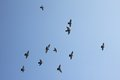 Flying birds in the blue sky Royalty Free Stock Photos