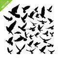 Flying birds silhouette vector Royalty Free Stock Photo