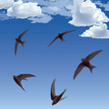 Flying birds swifts in the sky Royalty Free Stock Image