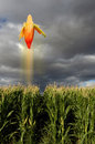Flying corn in field Royalty Free Stock Photo