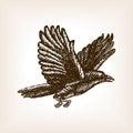 Flying crow sketch vector illustration
