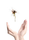 Flying dandelion on open hand Royalty Free Stock Images