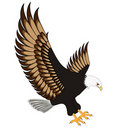 Flying eagle insulated on white background Royalty Free Stock Photography